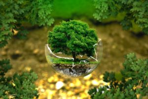 A small tree in a shattered orb of glass